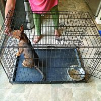 Crate Training To Keep Your Dog Content