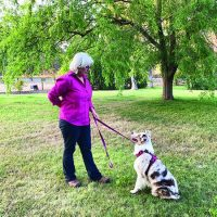 Tactical Extraction: Leash Pressure Dog Training