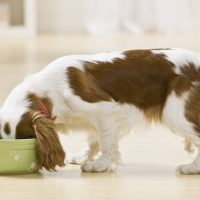 New Searchable Database of Approved Canned Dog Foods