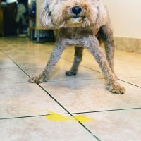 Dog Throwing Up Yellow? What You Should Know About 'Bilious Vomiting Snydrome'
