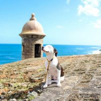 Satos are Puerto Rican Street Dogs, and You Can Adopt One